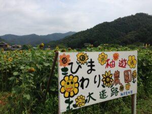 第18回柚津のひまわり祭り